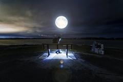 Stuemer Park Ottawa Composite (superdavebrem77) Tags: composite ottawa petrieisland autumn november night moon oilpaintfilter longexposure