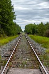 Fawcett Rail (Bracus Triticum) Tags: rail fawcett アルバータ州 alberta canada カナダ 8月 八月 葉月 hachigatsu hazuki leafmonth 2019 reiwa summer august