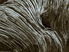 Juniper Bark (Ramona H) Tags: colorado dinosaurnarionalmonument bark duotone juniper texture abstract design