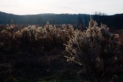 Late Autumn (Garen M.) Tags: nikkor2470f28s nikonz6 valleyforge washingtonmemorialchapel home