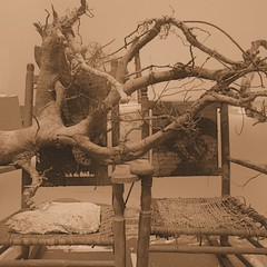 shabby chic? (msdonnalee) Tags: lonnieholley sepia conceptualart chair chaise stuhl silla sedia rockingchair root tree dilapidated brokendown