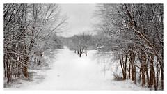 Winter Makes Her Entrance (kinglear55) Tags: winter landscape nikkormatft2 ilfordxp2 blackandwhitefilm adobe elements nikkor4386mmlens art photography