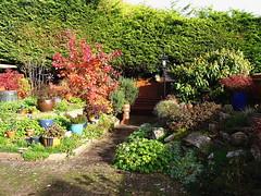 Our back garden (Snapshooter46) Tags: backgarden autumncolours shrubs sunlit home