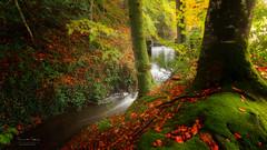 Etang de Baron (f.ray35) Tags: waterfall automne autumn wood forest nature bretagne bretagnetourisme brittany breizh breton