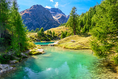 The blue lake (SLpixeLS) Tags: switzerland arolla lagouille mountain swiss landscape alps forest wood bluelake lacbleu