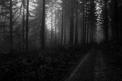 The misty season (Black&Light Streetphotographie) Tags: mono monochrome lichtundschatten lightandshadows landscape landschaft tiefenschärfe wow fullframe vollformat closeup dof depthoffield sony sonya7rii bw blackandwhite blackwhite bokeh bokehlicious blur blurring