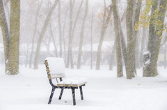 The Lonely Bench (Neil Cornwall) Tags: 2019 canada forestglade november ontario windsor fall leaves snow trees