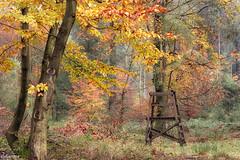 09112019-DSC_0005 (vidjanma) Tags: dinez automne couleurs forêt mirador