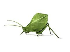 Leaf Katydid - Brian Chan (Mariano Zavala B) Tags: leaf katydid insect insecto hoja brian chan tutorial origami