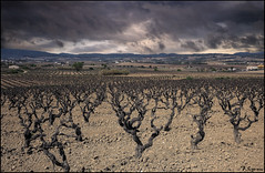Tormenta en las viñas. (antoniocamero21) Tags: paisaje foto color sony tormenta cielo viñas barcelona catalunya perspectiva santsadurnídanoia