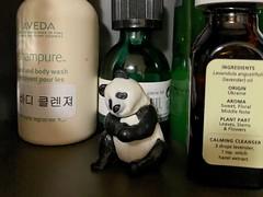 Hidden panda (Panda Mery) Tags: animal bangbaedong korea panda seoul