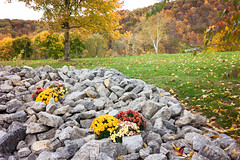 Fall mums (mpalmer934) Tags: flowers stones rocks grass autumn leaves trees branches hillside