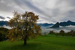 schwyz II (DeCo2912) Tags: canton schwyz switzerland schweiz fog nebel autumn fall tree