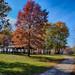 Autumn at Lions Park