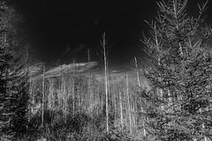 Woods (*Capture the Moment*) Tags: 2018 2019 backlight backlit bäume filze fotowalk gegenlicht inzell landschaften sonya6300 sonye356318200oss sonyilce6300 trees