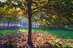 Autumn light (Dumby) Tags: landscape bucurești românia sector3 autumn fall colors nature outdoor tree