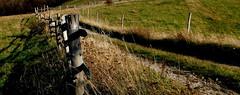 Górska droga. (andrzejskałuba) Tags: poland polska pieszyce dolnyśląsk silesia sudety europe plant plants roślina rośliny natura nature natural natureshot natureworld nikoncoolpixb500 naturephotographer nopeople beautiful beauty brown brązowy beautyofnature color cień colour zieleń green grass trawa jesień autumn autumncolors shadow road flora floral field pole mountainroad płot płoty fence fences view widok landscape krajobraz fieldroad mountainsofowls mountains góry kamionki 100v10f 1000v40f 1500v60f