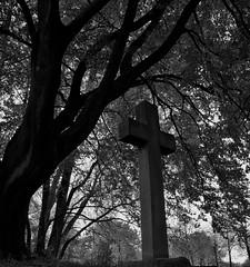 Stone cross (Oliver (Wolbadger)) Tags: ricohgr apsc cmos 28mm compact ricoh gr blackandwhite bw outside moorpark preston england lancashire uk unitedkingdom 1913 serpentine blackpoolroad autumn dark october fall