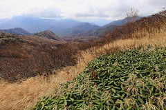 at Mt.Hiuchi, Myoko Togakushi Mountain Park in Niigata prefecture (yasushiinanaga) Tags: landscape mountain nationalpark japan autumn canoneos6d ef2470mmf4lisusm 24mm