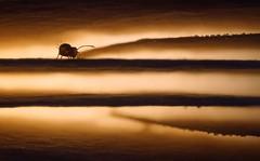 Into the underworld (Parchman Kid (Jerry)) Tags: tiny tuesday springtail mushroom gills nature light warm wet sony a6000 parchmankid jerry burchfield autumn macro underworld dicyrtomina pilz globular saundersi landscape ilce6500