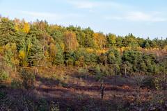 Castle Bottom in the fall (si_smith) Tags: blackbusheairport castle bottom autumn fall eveningsun november goldenleaves