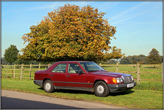 W124 (Jason 87030) Tags: car merc mercedes benz e200 200 e w124 classic wheels tree autumn autumnal maroon claret
