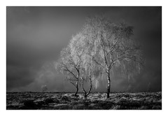 Lawrence Field - The Peak District / November 3rd (Edd Allen) Tags: sunset sun light nikond610 nikon d610 countryside country atmosphere atmospheric 18mm landscape uk england greatbritain britain hills ethereal serene bucolic tor tree treescape infrared bw blackandwhite monochrome fineart lawrencefield silverbirch nikkor70200mm nikkor 70200mm peakdistrict thepeakdistrict