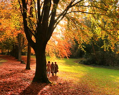 Autumn Light and Colour (acwills2014) Tags: clifton autumn fall leaves reds golds bristol stroll light shade colours