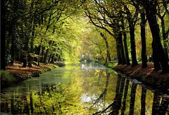 . (atsjebosma) Tags: autumn herfst kleuren colourful bridge brug ditch trees bomen takken branches atsjebosma november 2019 sun sunlight zon zonlicht coth5 ngc