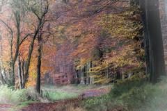 09112019-DSC_0026 (vidjanma) Tags: bihain automne chemin couleurs forêt