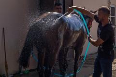 Pferd genießt eine erfrischende Dusche nach dem Rennen (Ivan Radic) Tags: 56ljubičevskekonjičkeigare 56ljubičevskiekonjičkeigare canoneosm50 horseriders ljubičevskekonjičkeigre2019 pferd pferdpflege pozarevac reiter rider serbia serbien srbija veranstaltung baden bath bathing duschen event flags horse ivanradic wash washing sigma 2470mm f28 dg os hsm art sigma2470mmf28dgoshsmart