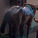 Pferd genießt eine erfrischende Dusche nach dem Rennen
