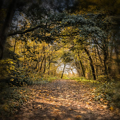 Woodland Path during Autumn walk (Ian Johnston LRPS) Tags: red woods path square branches leaf autumn walking orange browns undergrowth sunlight outdoors outside