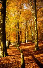South Downs Autumn (broadswordcallingdannyboy) Tags: leaves nationalpark autumn fall mood light hampshire gardens leonreillyphotography copyright donotcopy eos7d canon leonreilly eflens colour autumncolour britishnationalpark southdowns qecp