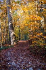 Herbst - Autumn (w.lichtmagie) Tags: niederbayern landshut hofberg autumn bayern licht warm ngc herbst wald weg gegenlicht waldweg canonefs1755