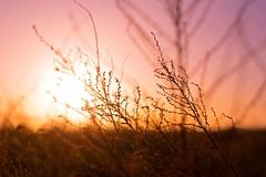 Monday morning (~ Jessy S ~) Tags: nikon750 d750 nikon nikkor 50 50mm 18 light lumiere morning matin sun sunlight soleil colors colorful colorfull fx fullframe nikkor50mmf18 purple violet jaune yellow orange flora flore scape scapes paysage sky ciel rose pink sunrise