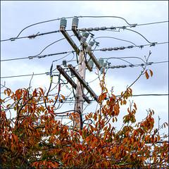 Tree Top (Timothy Valentine) Tags: lines foliage hct pole 1119 large sky fbpost 2019 telegraphtuesday tree chatham massachusetts unitedstatesofamerica