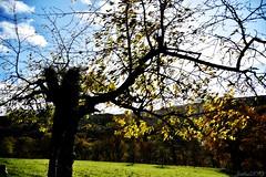 ~~ Branches d'Automne....~~ (Joélisa) Tags: novembre2019 arbre branches automne ciel picmonkey