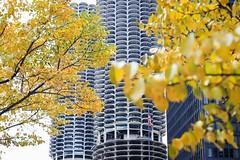 Chicago landmark × yellow (Yuki (8-ballmabelleamie)) Tags: marinacity ibmbuilding amaplaza corncobbuilding autumn fall colours colors highrise apartment condominium yellow chicagoriver wilco