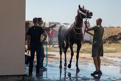 Men washing a horse (Ivan Radic) Tags: 56ljubičevskekonjičkeigare 56ljubičevskiekonjičkeigare canoneosm50 horseriders ljubičevskekonjičkeigre2019 pferd pferdpflege pozarevac reiter rider serbia serbien srbija veranstaltung baden bath bathing duschen event flags horse ivanradic men wash washing sigma 2470mm f28 dg os hsm art sigma2470mmf28dgoshsmart