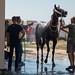 Men washing a horse