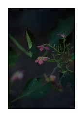 This work is 3/15 works taken on 2019/10/05 (shin ikegami) Tags: sony ilce7m2 a7ii sonycamera 50mm lomography lomoartlens newjupiter3 tokyo 単焦点 iso800 ndfilter light shadow 自然 nature naturephotography 玉ボケ bokeh depthoffield art artphotography japan earth asia portrait portraitphotography