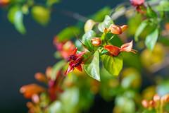 Wilhelma Stuttgart (skp-mm) Tags: 135mm blumenundpflanzen farben ilce7rm4 nature sony sonyalpha7riv wilhelma a7riv α7riv stuttgart badenwürttemberg deutschland