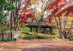 Fall foliage in Namsan, Seoul (Thierry Laplanche) Tags: namsan seoul fall 단풍 남산