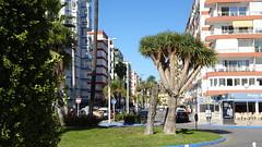 Torre del Mar_06440 (Wayloncash) Tags: spanien spain andalusien costadelsol torredelmar