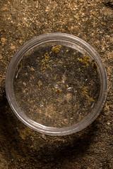 Dark-sided Chorus Frog (amdubois01) Tags: amphibians anura arcuatespottedpygmyfrog asia blackflankedpigmyfrog blacksidednarrowmouthedfrog burrowingmicrohylidfrog chorusfrog cúcphươngnationalpark darksidedchorusfrog heymonsnarrowmouthedfrog heymonsnarrowmouthedtoad heymonsricefrog microhyla microhylaheymonsi microhyletta microhylettaheymonsi microhylidfrog microhylidae microhylinae narrowmouthedfrog narrowmouthedtoad pigmyfrog pygmyfrog ricefrog southeastasia taiwanricefrog vietnam amphibian forest frog heymonsi larva larvae tadpole