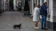 No ice cream for the dog... (Ivan van Nek) Tags: sintbernardusstraat maastricht icecream nikon nikond7200 d7200 provincielimburg limburg streetphotography dog chien hond hund onzelievevrouweplein