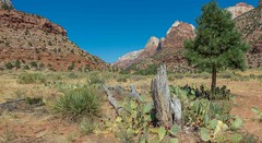 Zion Canyon @ Zion National Park-06773 (gsegelken) Tags: gary lorrie parustrail patty springdale usa utah zionnationalpark panorama