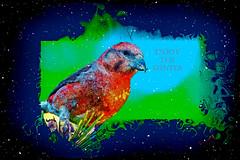 Enjoy the Winter (SØS'Art) Tags: bird crossbill digiart digitalartwork art kunstnerisk manipulation solveigøsterøschrøder artistic eye nature painting photomanipulation winter 100views