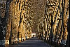 Winter light! (Jorge Cardim) Tags: cúria aveiro portugal termas image colors cores foto thermae spa hotel garden jardim cardim jorge